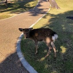 画像 奈良公園で紅葉! の記事より 5つ目