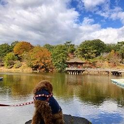 画像 奈良公園で紅葉! の記事より 35つ目
