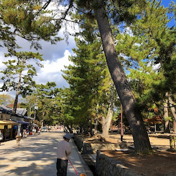 画像 奈良公園で紅葉! の記事より 17つ目