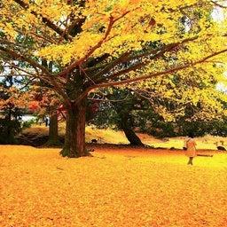 画像 奈良公園で紅葉! の記事より 26つ目