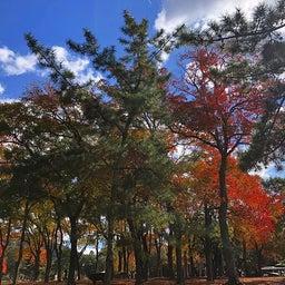 画像 奈良公園で紅葉! の記事より 18つ目