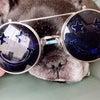 「犬のしつけの常識」の色メガネをはずして、人生の主人公になる!の画像