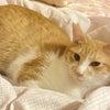 11/15(日)にゃんクルー譲渡会に参加予定に猫さんーその1の画像