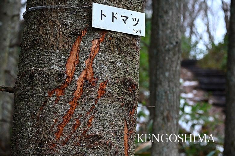 藻岩山 トレラン トレイルランニング ken五島