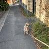 愛犬散歩中に遭遇した謎?の生き物・・・の画像