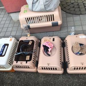 埼玉指導センター(熊谷)譲渡会の画像