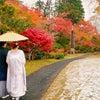 紅葉ロケ★ウェディングフォト~藤田記念庭園~の画像