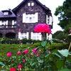 秋薔薇の画像