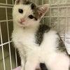 本日14時からにゃんクルー保護猫譲渡会、コロナ対応して開催します!の画像