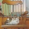 寝坊した朝も 猫はかわいい(*ノωノ)の画像