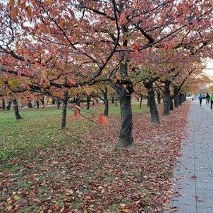 めっきり秋らしくなりましたの画像