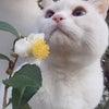 白花の画像