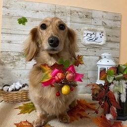 画像 愛犬の健康寿命を延ばすのは飼い主次第♪ の記事より 3つ目