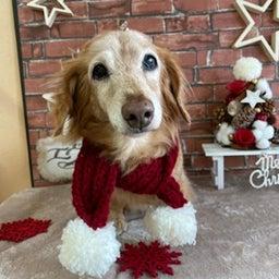 画像 愛犬の健康寿命を延ばすのは飼い主次第♪ の記事より 1つ目