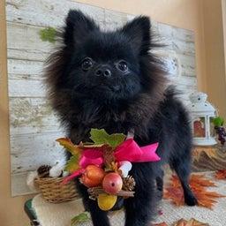画像 愛犬の健康寿命を延ばすのは飼い主次第♪ の記事より 10つ目
