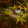 紅葉に高揚・大矢田神社と下呂温泉(岐阜方面)の画像