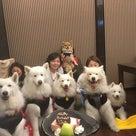 2020.11.16 ご宿泊のワンちゃん達の笑顔☆の記事より