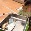 生まれて初めて魚を見た人   にわか明太子の画像