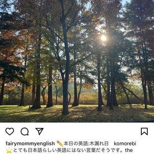 【今日の英語ハンティング】木漏れ日の画像