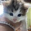 猫との生活 猫の成長の画像