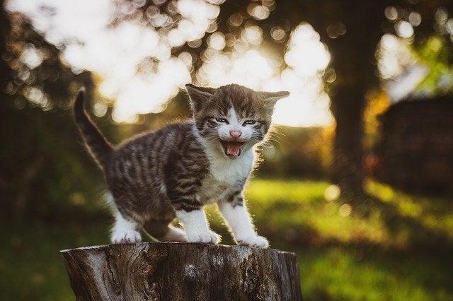 君 たん だ なっ よ は 猫 に な アニマルコミュニケーター岩津さんに聞いてみよう ~鳴き叫ぶ猫さん│フェリシモ猫部