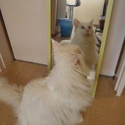 画像 今日は「鏡が気になるティアラちゃん」の巻 の記事より 4つ目