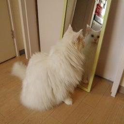 画像 今日は「鏡が気になるティアラちゃん」の巻 の記事より 3つ目