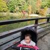 甲山森林公園と武庫之荘の大井戸公園のばらの画像