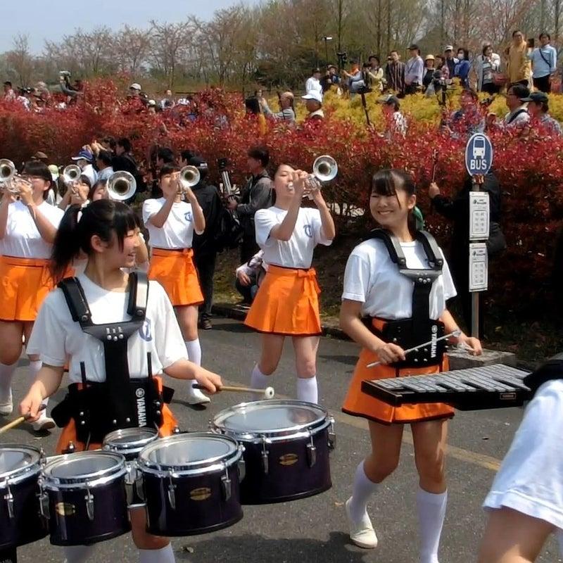 予定 2019 吹奏楽 部 京都 高校 橘