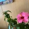 【魂が喜ぶ呼吸瞑想LIVE】オンライン開催!!の画像
