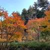 今年は、身近な秋を楽しみました!の画像