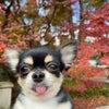 銀座ママの幸せ習慣♡京都 権兵衛でランチ♡全国パワースポット巡りの画像