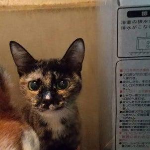 保護ボランティアが犬猫虐待疑い(NHKニュース)の画像