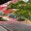 京都2日目 銀座ママ秋の京都&和歌パワースポット巡り編の画像