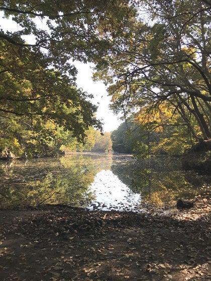 震生湖の湖面 秋風景