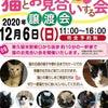 猫とお見合いする会 12/6(日)に行います!の画像