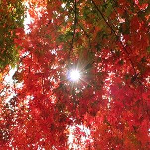 紅葉を見に行きました(岡城跡)の画像