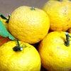 柚子でアンチエイジングな冬の準備の画像