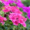 銀座ママの幸せ習慣♡本日の開運花 今日のお花はこれ!お花の力でパワーアップでスタート11月24日の画像