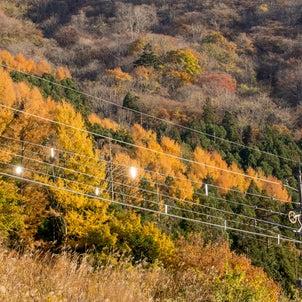 紅葉の野岩鉄道を撮っちゃおうツアー(リメイク版)の画像
