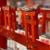 秋の京都  伏見稲荷の赤い鳥居の画像