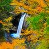 銀座ママの全国パワースポット巡り♡今週は徳島へ 徳島の迫力満点の紅葉と金運神社と御朱印の画像