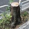 街路樹と切り株の画像