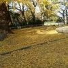 今の時期、岡山市内でのデートスポット穴場情報です(^^♪の画像