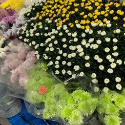 画像 たくさんの花が届きました〜っ‼️ の記事より 2つ目