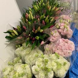 画像 たくさんの花が届きました〜っ‼️ の記事より 1つ目