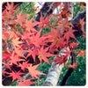 晩秋の森林セラピーを楽しむの画像