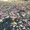(網干)紅葉散策の画像