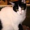 猫団子の画像