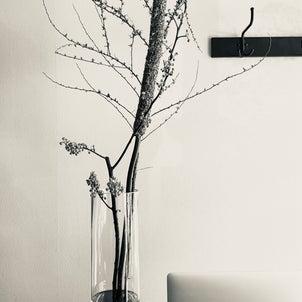 【入り口】季節の木々たちの画像
